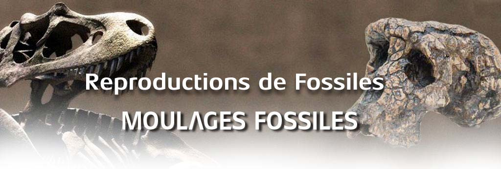 moulages-fossiles.com